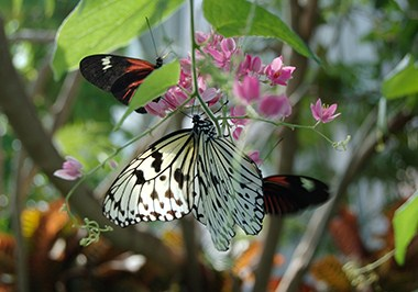 Butterfly House -