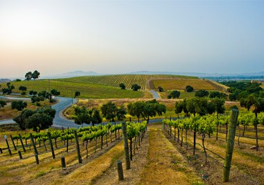 Livemore Valley Wine Country
