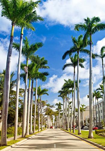 Royal Palm Way