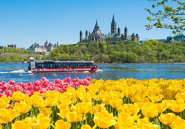 Tulips Lady Dive Ottawa River