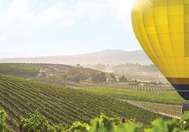 Hot Air Balloon Over Vineyard