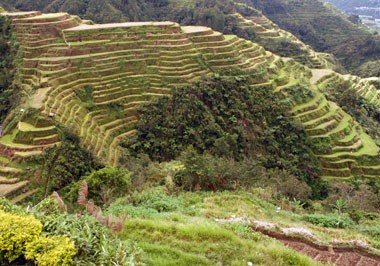 Rice Terraces, Quezon Province