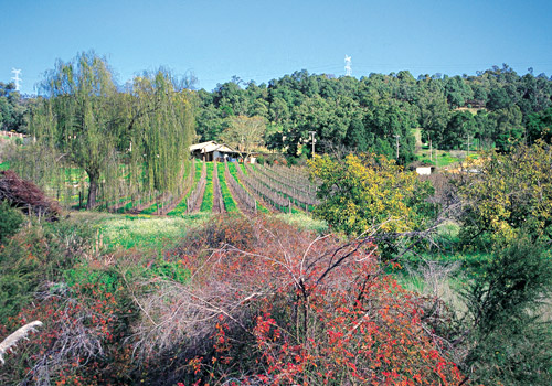 Piesse Brook Vineyard