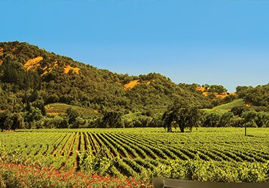 Santa Rosa Vineyards