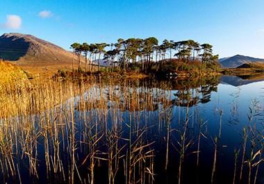 Pine Island Derryclare Lough Connemara