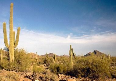Lost Dog Wash, McDowell Sonoran Preserve
