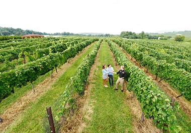The vineyards at Adams County Winery