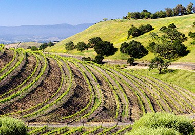 Santa Barbara County Wine Country