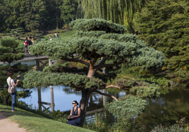 Chicago Botanic Garden Japanese Garden Poser