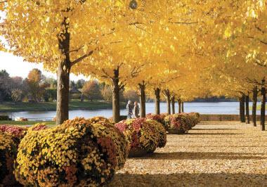 Chicago Botanic Garden.Glencoe