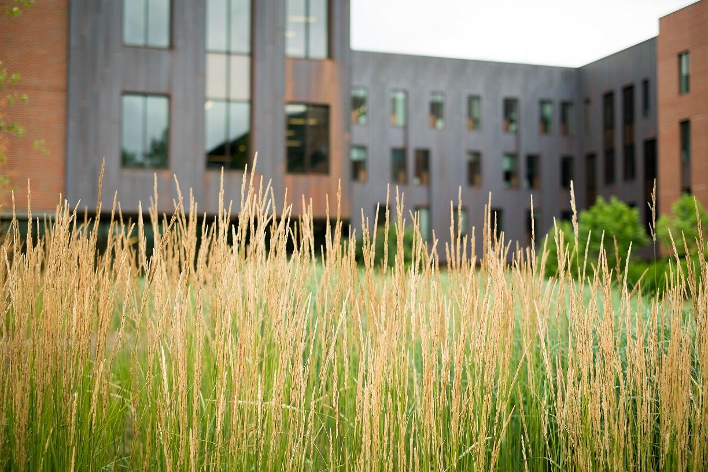 Grass140714a028-1