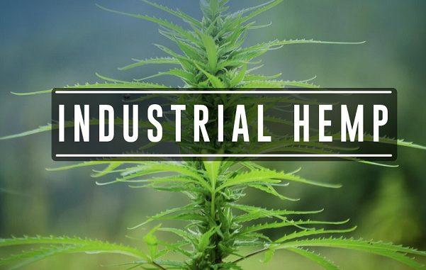 industrial hemp-601x381