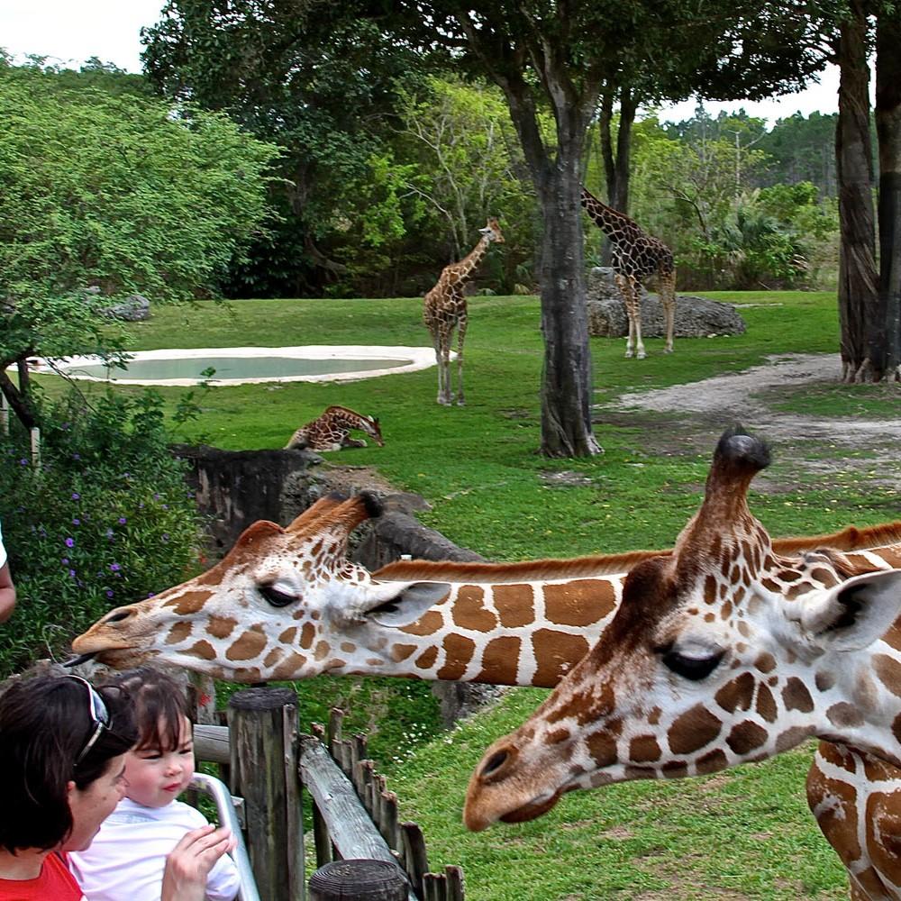 zoo miami 1-sq
