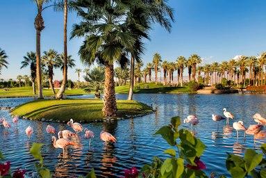 Desert Springs Flamingos