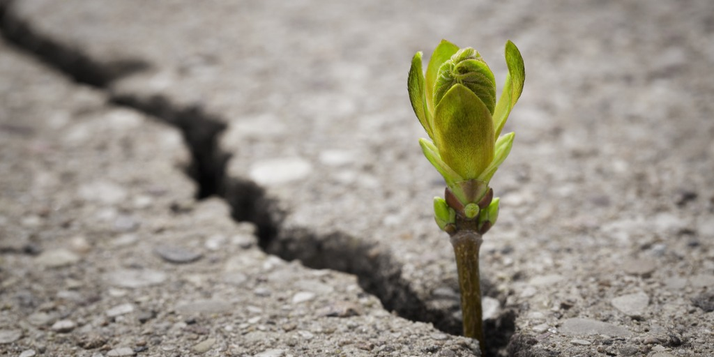 small green plant growing from dry ground