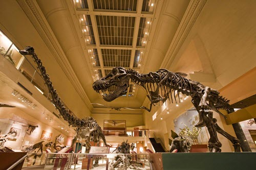 Smithsonian_Dinosaurs_Gift-0005a