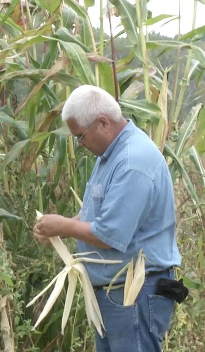 Husking Corn2
