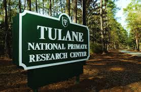 Tulane-primate