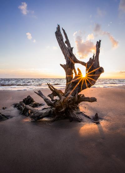 400-driftwood-sun