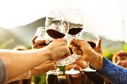 wine-amelia