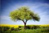 APL_Tree tiny