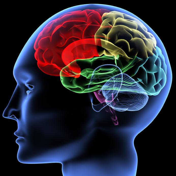 Brain_000005809739Small