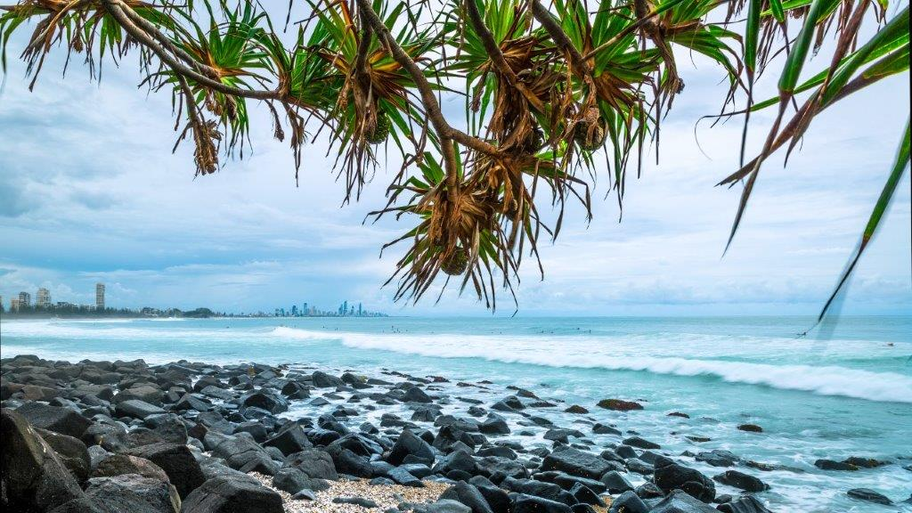 Burleigh beach and rocks looking through pandanus trees to Surfers Paradise