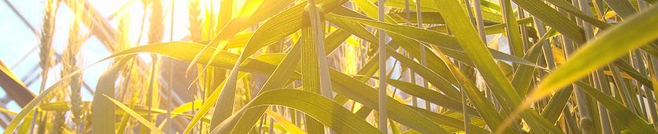 Wheat Breeding Technology Workshop