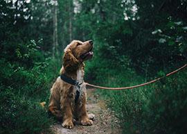 Mini_Story_Puppy