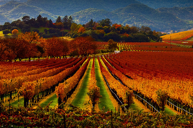 fall_in_wine_country