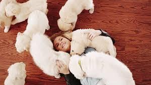 Puppy cuddling