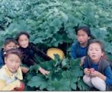 Mongolian Veggies