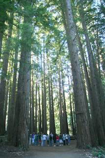 BO - Redwoods and People