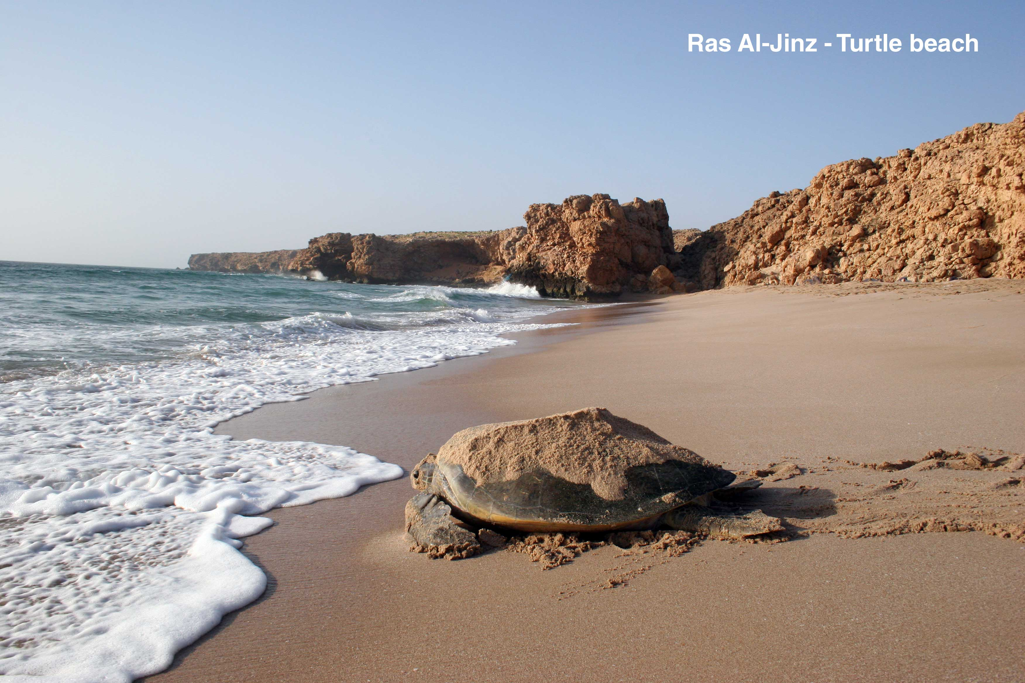 Ras-Al-Jinz---Turtle-beach