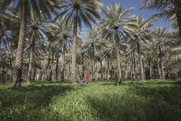 Oman_Birkat Al Mouz_JW5A3103