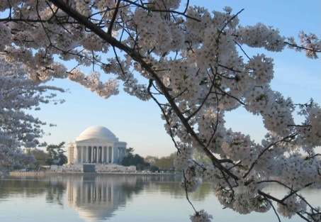 Jefferson Memorial w:Cherry Blossoms