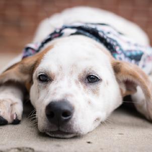 RE Humane Society - Dog 1