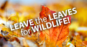 leave the leaves