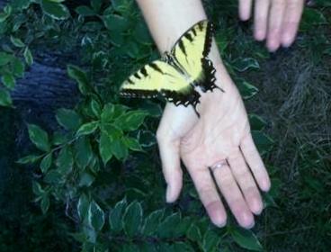 GaleBailey_butterfly