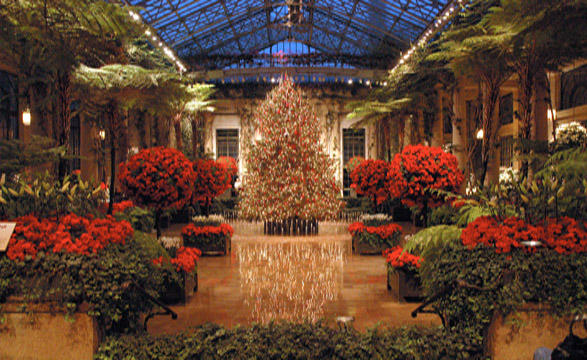 longwood-gardens-christmas-tree-587