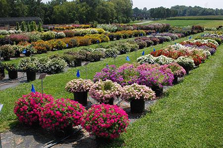 Flower Trials Field Day 450x300