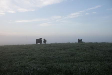 Pastured Livestock Production CV