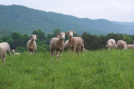 Pasture and Grazing Management 450x300