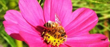 LOFA Bee