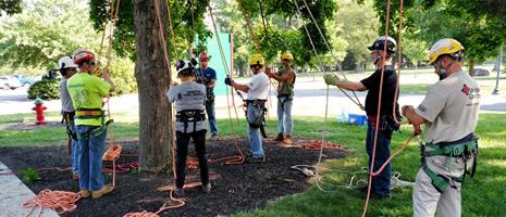 Tree Climbing School