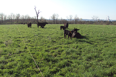 Central Susquehanna Winter Beef Producer Meeting2-450x300