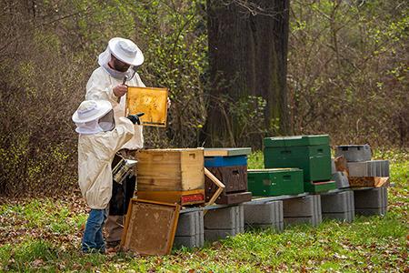 Beekeeping Winter Series 450x300