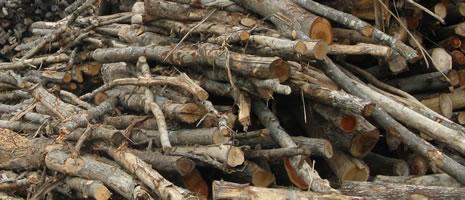 Log Pile - (Ciolkosz PSU)