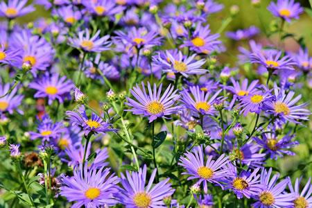 Home Gardeners School CV