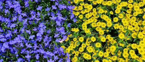 Master Gardener Calendar for Winter & Spring